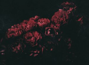 EP Red Red Rose - The Light: