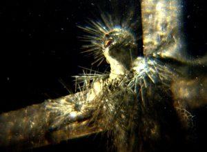 Клип Behemoth - Ecclesia Diabolica Catholica
