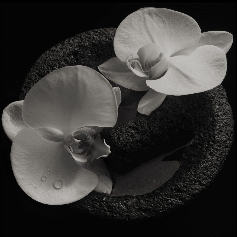 Майк Паттон и французский композитор Жан-Клод Ваннье объявили о записи совместного альбома «Corpse Flower»